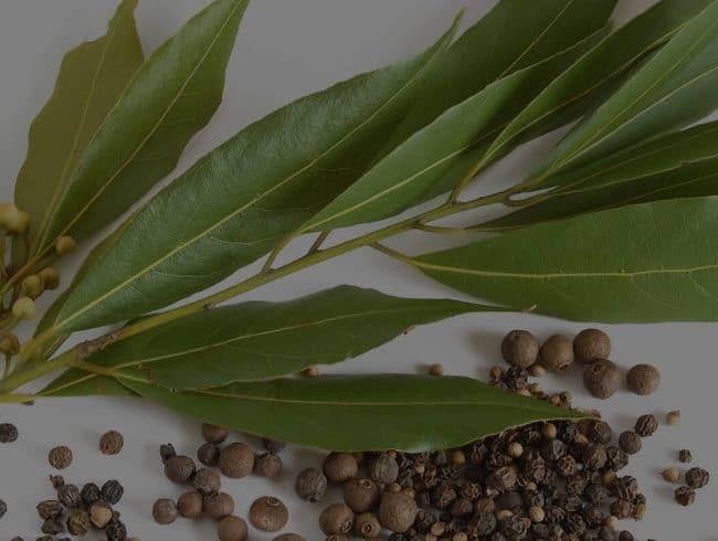 Herbs of Australia