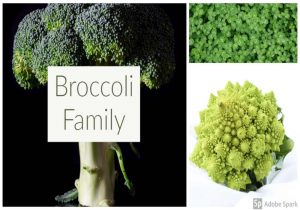 Broccoli Benefits for Hormone Balance