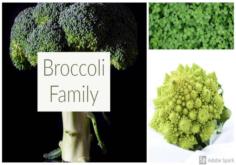 Collage of broccoli family of vegetables including broccoli sprouts, broccoli spears and cauliflower romanesco by The Healthy RD