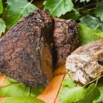 Chaga Tea Benefits for Health