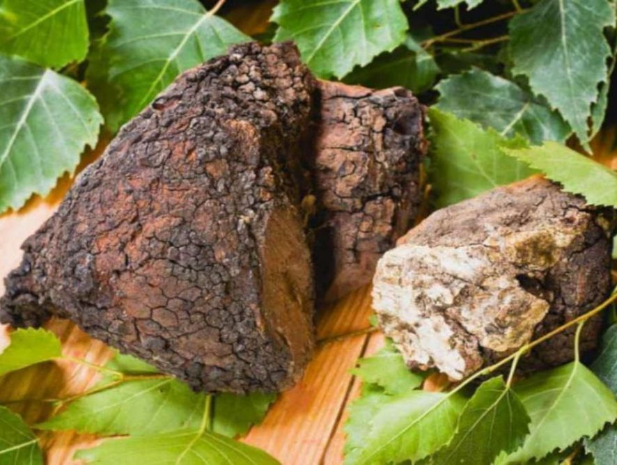 Fascinating Chaga Benefits and How to Make Chaga Tea