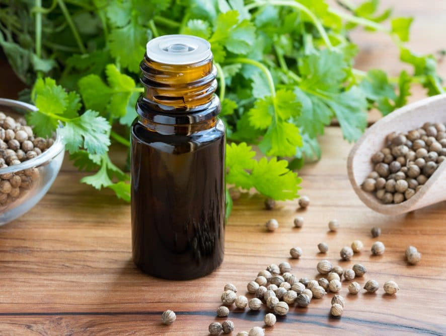Cilantro Oil Detoxification Benefits