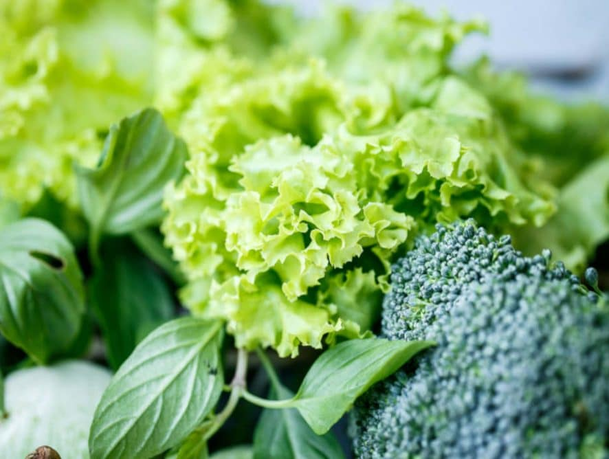 Folate Versus Folic Acid: Are They Equal?