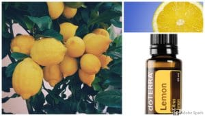 Fresh lemons and Doterra lemon essential oil by The Healthy RD