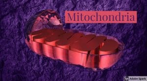 Mitochondria image by The Healthy RD