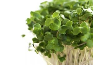 Fresh green broccoli sprouts on a white background by The Healthy RD