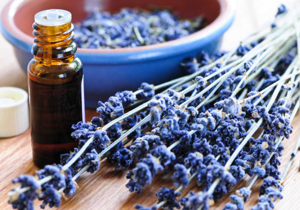 Dried lavender blossoms with a bowl of lavender buds and amber bottle of lavender essential oil by The Healthy RD