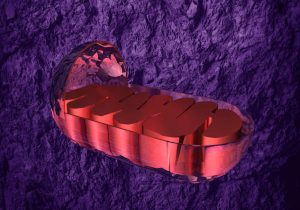 Red mitochondria graphic with a purple background by The Healthy RD