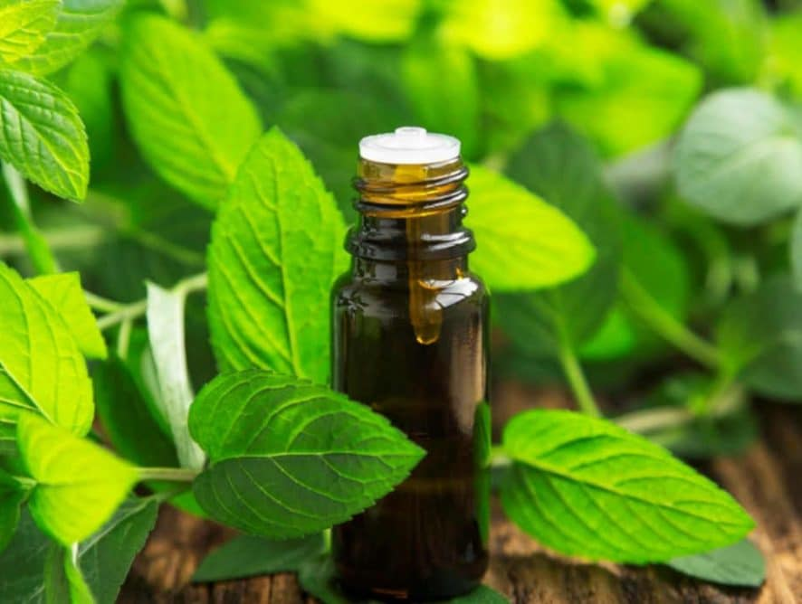 10 Potent Peppermint Essential Oil Uses for Health