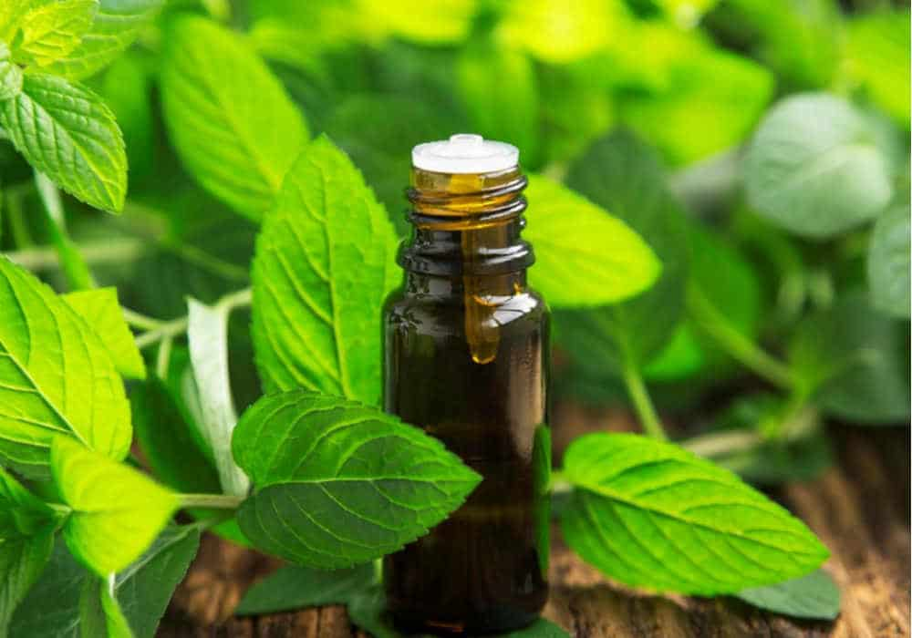 Amber bottle of peppermint essential oil with fresh peppermint leaves in the background by The Healthy RD
