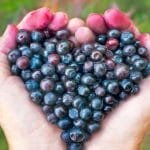 Huckleberry Syrup Recipe and Huckleberry Benefits