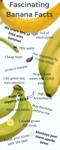 Banana facts infographic by The Healthy RD