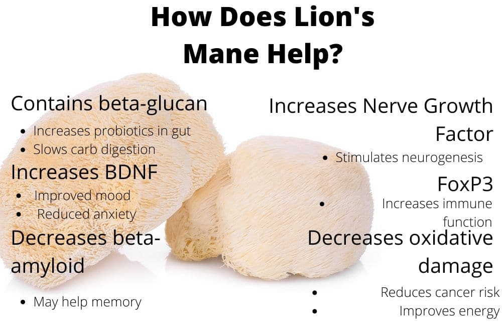 How Lion's Mane benefits the body by The Healthy RD