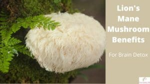 Lion's man mushroom benefits for brain detox by The Healthy RD