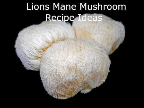 Lion's mane mushroom recipe ideas header image by The Healthy RD