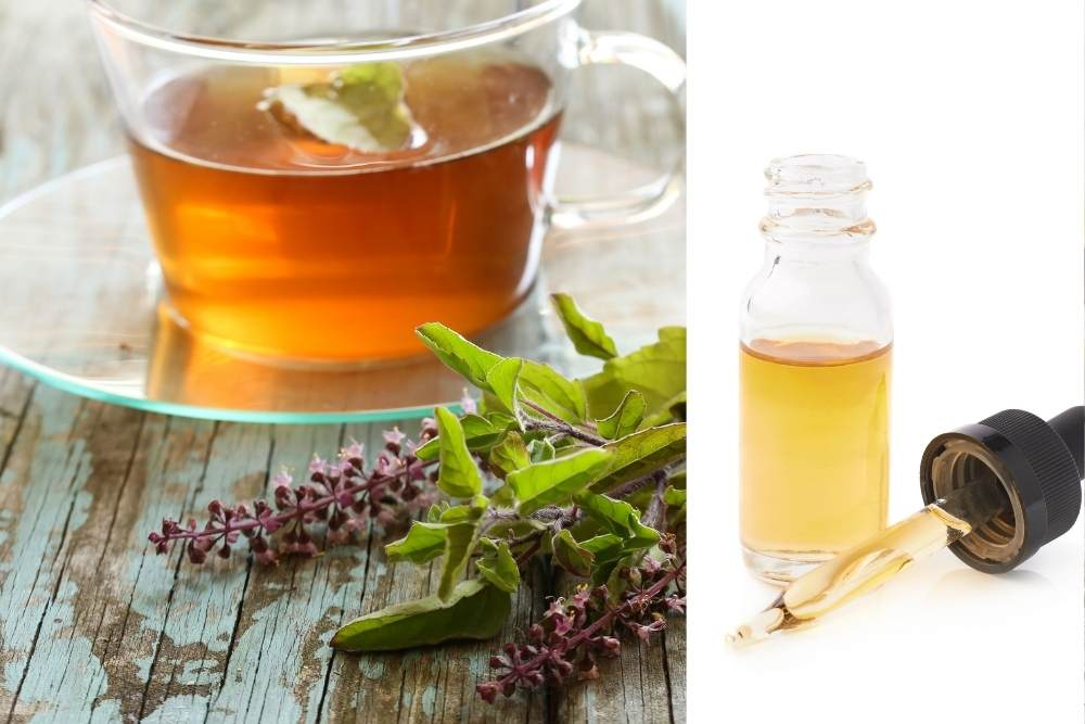Holy basil tincture and tulsi tea with fresh tulsi leaves and blossoms by The Healthy RD