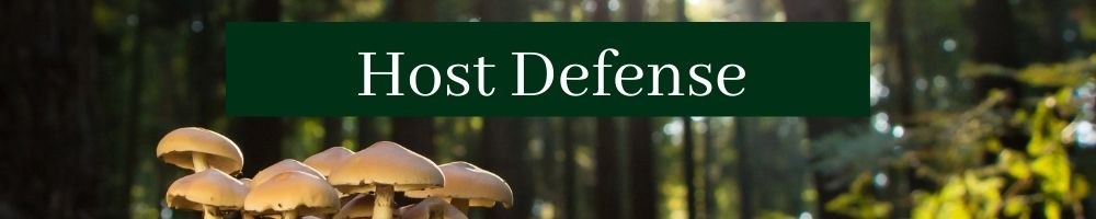 Forest with mushrooms with wording Host Defense by The Healthy RD